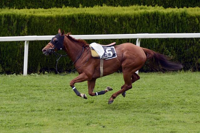horse-racing-1577287_640
